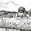 Damlander polder